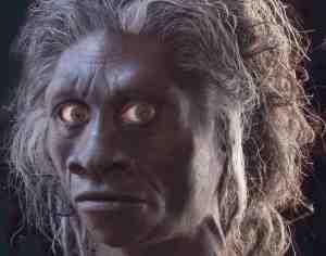 Homo floresiensis, Indonesia