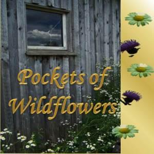 Pockets of Wildflowers - Diane Lynn McGyver