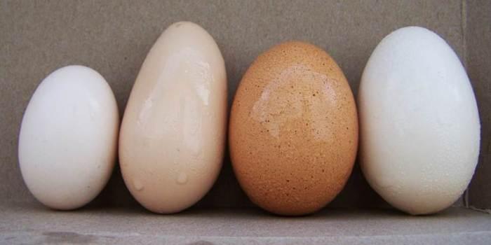 Sustainability Eggs