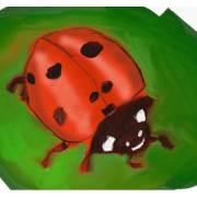 Lady Bug 5x5