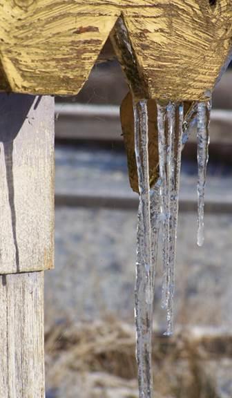 Garden 2014 11 16 Ice