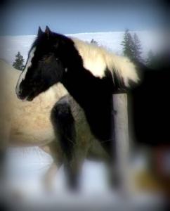 horse edited